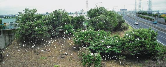 「名古屋 高速 鷺」の画像検索結果