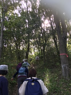 午後の木漏れ日.jpg