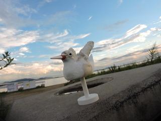 玉島のコアジサシ「飛ぶんだ!!」3.JPG
