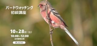 benimashiko_murakami940x450-2.jpg