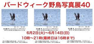 birdweek_940x450_2020.5.22.jpg